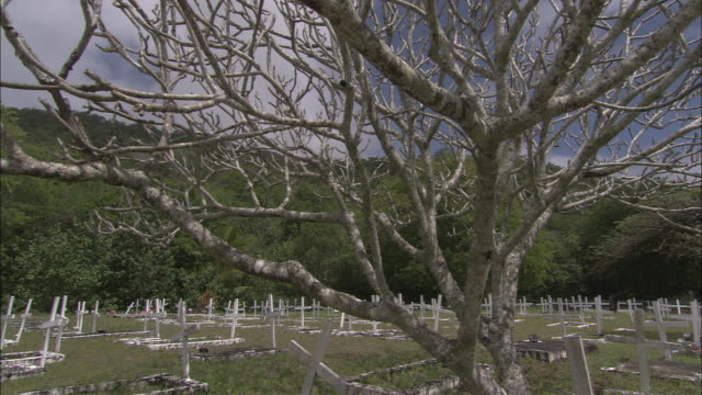 a lone tree stands in a cemetery. - cemetery stock videos & royalty-free footage