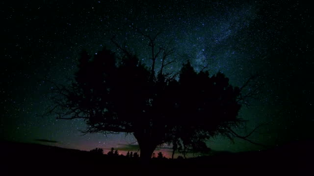 Lone western juniper with northern lights aurora borealis and milky way dark sky stars at night in desert