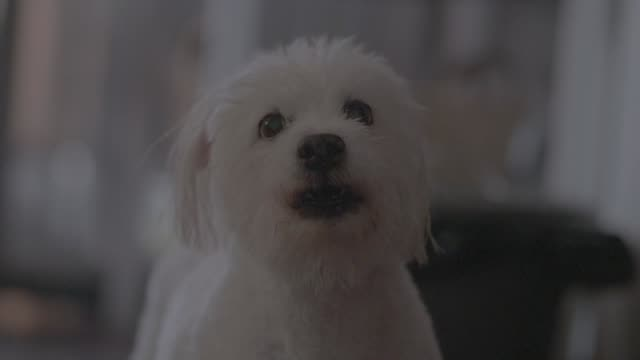 loneliness dog - fear stock videos and b-roll footage