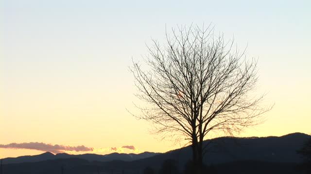 hd time-lapse: lonely bare tree - bare tree bildbanksvideor och videomaterial från bakom kulisserna