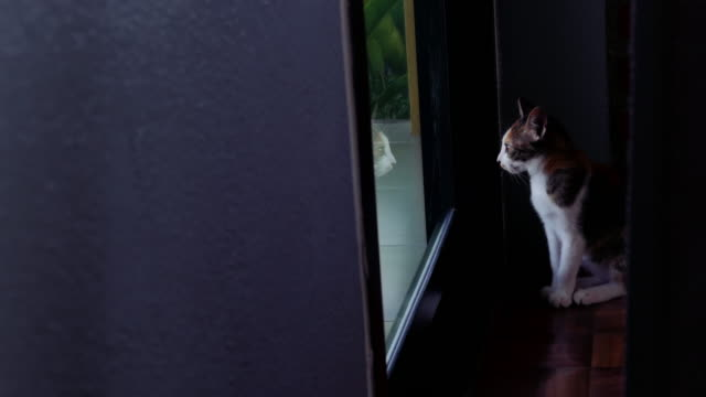 lonely cat looking out from door - waiting stock videos & royalty-free footage