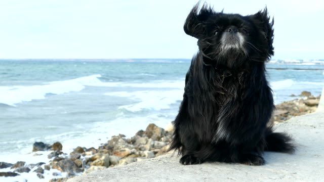 Lonely dog on the stormy coast