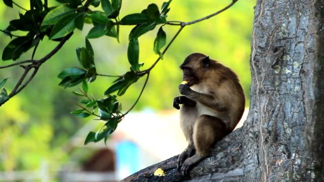 einsam monkey - braun stock-videos und b-roll-filmmaterial