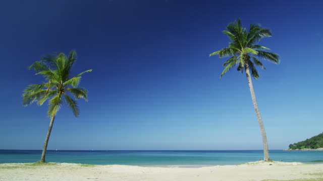 2 lonely palms on deserted beach, phuket, thailand - phuket stock videos & royalty-free footage