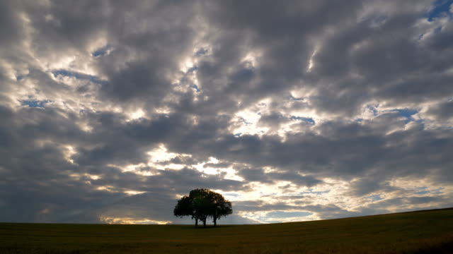 lonely three trunk tree in the evening sun - three objects stock videos & royalty-free footage