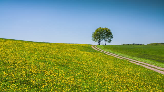lonely tree in dandelion field - crane shot - grass area stock videos & royalty-free footage