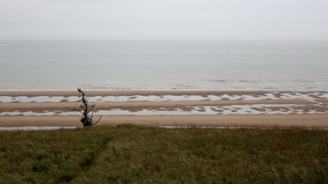 lonely tree in the beach - omaha beach stock videos and b-roll footage
