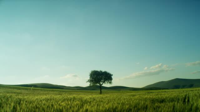 vídeos y material grabado en eventos de stock de lonely tree in the field - anamórfico