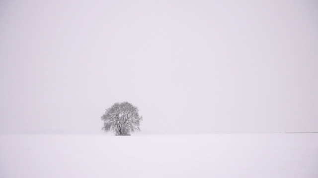HD SUPER SLOW MO: Lonely Tree In The Winter Landscape