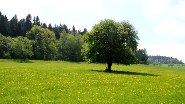 Lonely tree on green meadow and blue sky