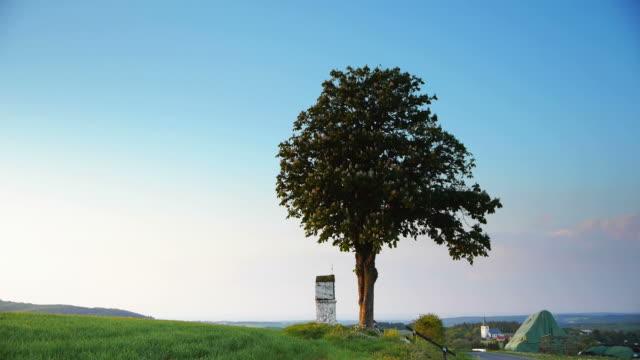 crane down: lonely tree - crane shot stock videos & royalty-free footage