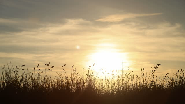 long beach grass at sunset. silhouette. - image stock videos & royalty-free footage