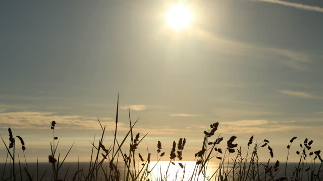 long beach grass at sunset. - image stock videos & royalty-free footage