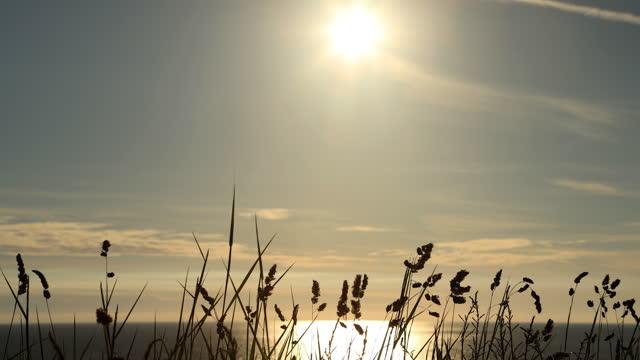 日没時の長いビーチグラス。 - イングランド南西部点の映像素材/bロール