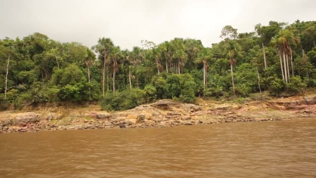 vídeos de stock, filmes e b-roll de long crab shot the amazon rainforest view from moving riverboat a transport riverboat travels in the brazilian amazon from maues to manaus on... - amazonas state brazil