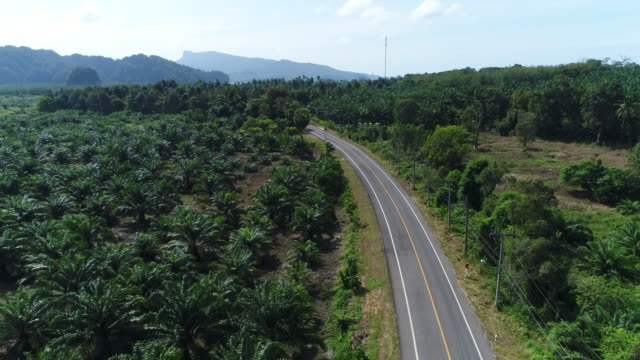 4K Long curved road In the coconut tree garden, photo by drone on top view.