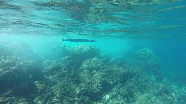 long fish swimming underwater near camera - one animal stock videos & royalty-free footage