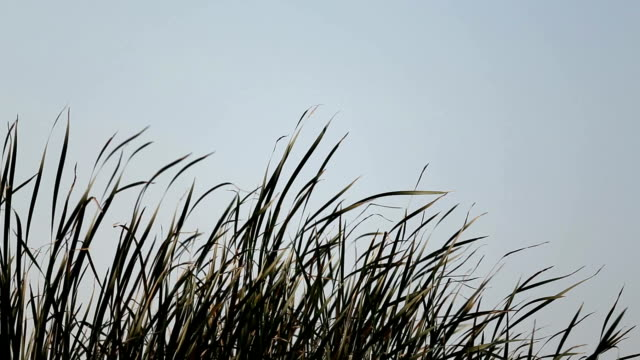 long grass background - blade of grass stock videos and b-roll footage