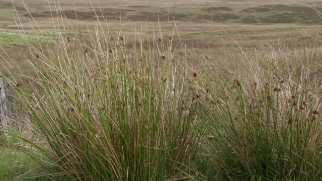 vídeos de stock, filmes e b-roll de grama alta ao vento na escócia rural - johnfscott