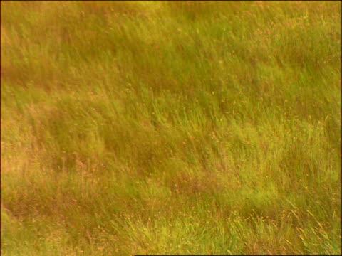 long grass blowing in the wind / saskatchewan - saskatchewan stock videos and b-roll footage