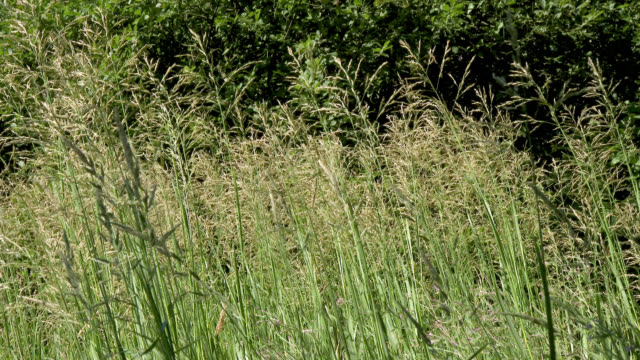long grass blowing in the wind - johnfscott stock videos and b-roll footage