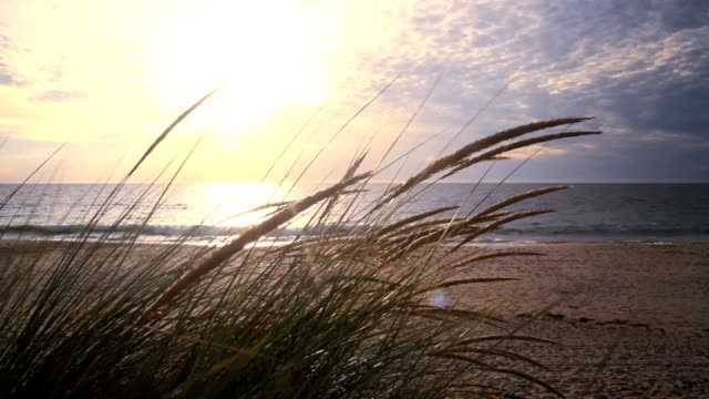 Long grass by the beach at sunset