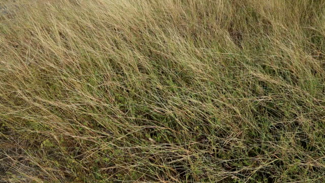 long grass moving in wind - blurred motion stock videos & royalty-free footage