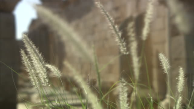 long grasses frame a view of the stone walls and pillars of leptis magna. - ancient civilisation stock videos & royalty-free footage