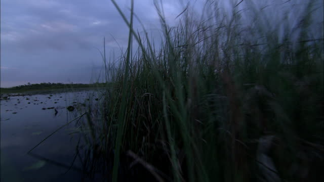 long grasses grow in the florida everglades. - everglades national park stock videos & royalty-free footage
