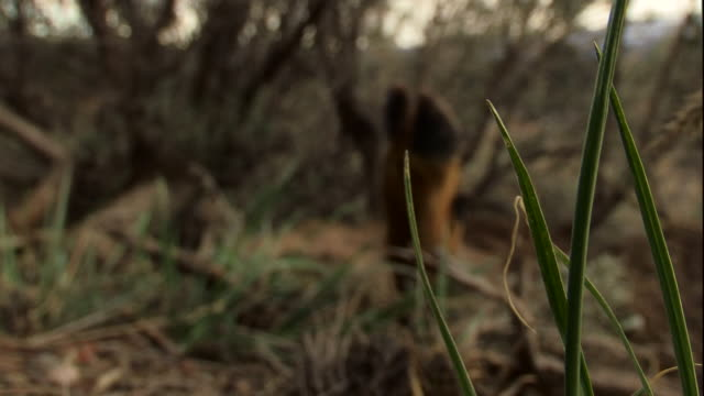 long grasses surround the hooves of a dead deer. - hoof stock videos & royalty-free footage