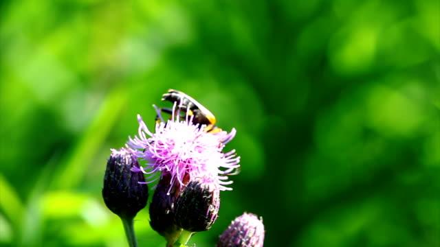 vídeos y material grabado en eventos de stock de cardo escarabajo de cuerno largo - escarabajo de cuerno largo