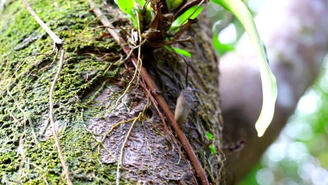 long horn beetle on tree trunk - frankrikes utomeuropeiska områden bildbanksvideor och videomaterial från bakom kulisserna