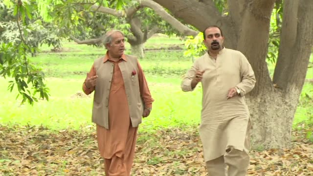 long in the shadow of its more economically powerful rival india pakistan has an opportunity to wrest the advantage in south asias mango wars thanks... - multan stock videos and b-roll footage