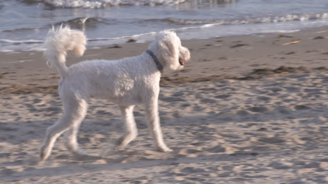 long island sound dogs playing on beach - vector stock videos & royalty-free footage