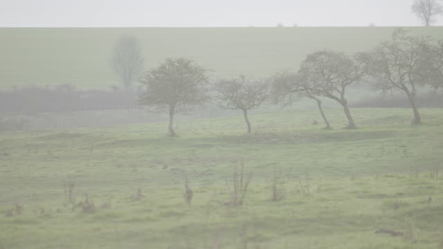 long lens shot of a foggy landscape in wharram percy - pasture stock videos & royalty-free footage