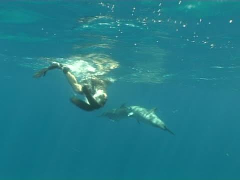 Long Nose Spinner Dolphins, Stenella longirostris, ascending, pan to snorkeler, Fernando de Noronha, Brazil