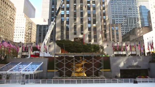 long shot, a 76-foot tall norway spruce, from shelton, ct, is lifted into position as the 2013 rockefeller center christmas tree on november 8, 2013... - rockefeller center christmas tree stock videos & royalty-free footage