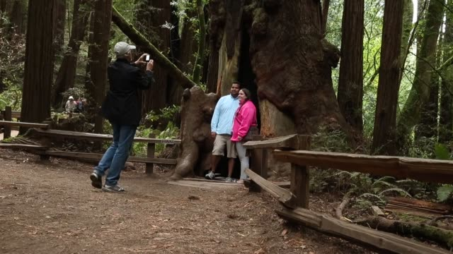 long shot a man photographing a couple in a hollow sequoia tree finally some good news about the effects of climate change it may have triggered a... - giant sequoia stock videos and b-roll footage