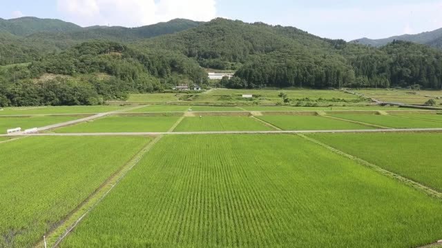 Long shot a rice farmer works in a paddy field in Yabu City Hyogo Prefecture Japan on Wednesday June 25 Wide high angle view paddy fields Long shot a...