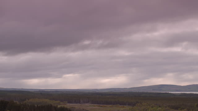 long shot across a forested landscape at ross and cromarty, scotland. - スコットランド点の映像素材/bロール