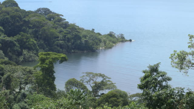 long shot across the tree lined coastline of bugala island. - ウガンダ点の映像素材/bロール