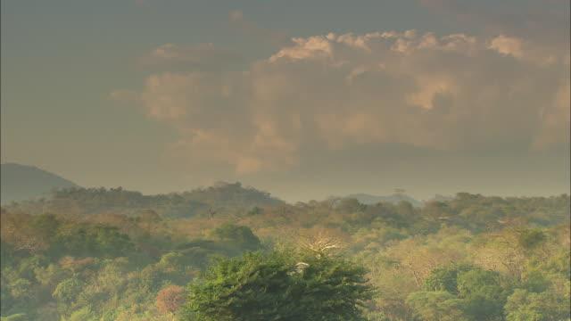 long shot across trees in zimbabwe.  - repubblica dello zimbabwe video stock e b–roll