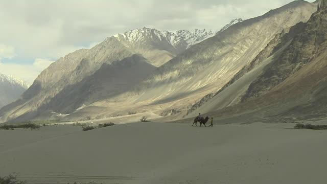 long shot camel safari nubra valley leh jammu and kashmir india - safari india stock videos and b-roll footage