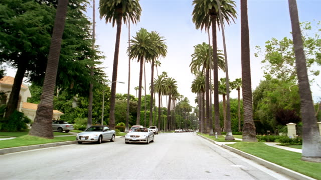 Long shot car point of view driving down palm-tree lined street / Beverly Hills, California