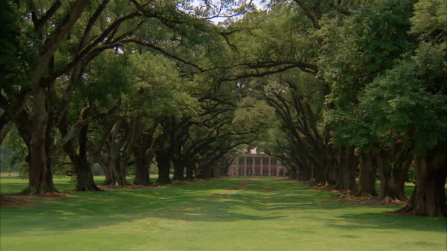 long shot car point of view driving past oak alley plantation with canopy of oak trees in foreground / vacherie, louisiana - südliche bundesstaaten der usa stock-videos und b-roll-filmmaterial