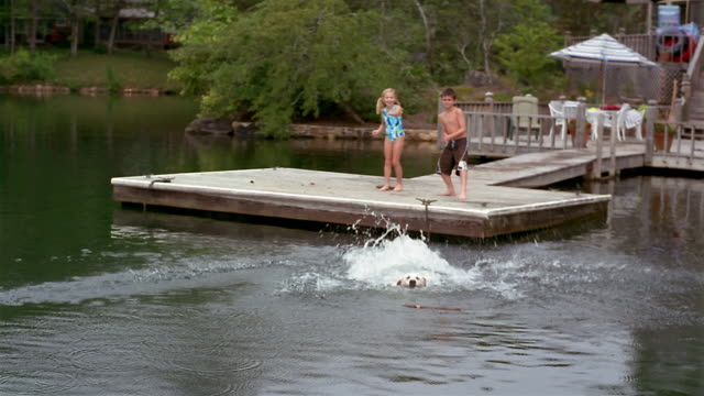 long shot children playing fetch with labrador retriever off dock - clarkesville stock videos & royalty-free footage