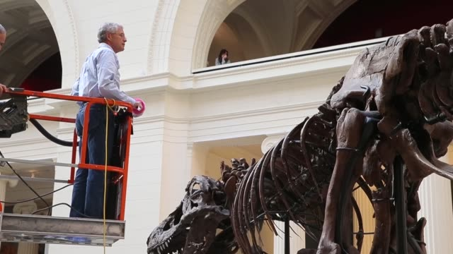 long shot geologist bill simpson cleans sue a 67millionyearold tyrannosaurus rex on display at the field museum on november 12 2013 in chicago... - geologist stock videos & royalty-free footage