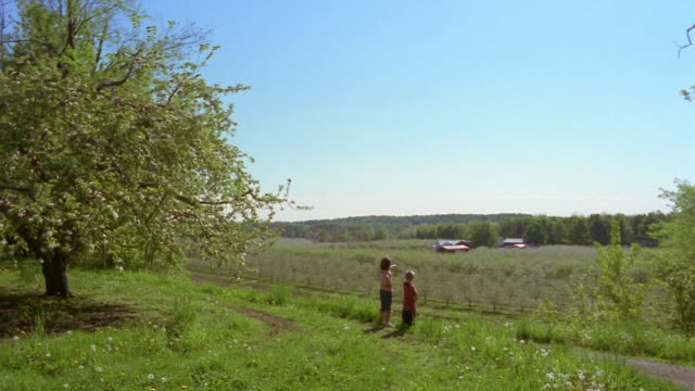 Long shot girl and boy looking + pointing at young apple trees in orchard / Marion, New York