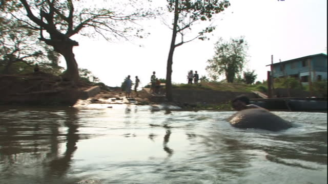 long shot hand-held - two men ride an elephant through a river in thailand. / thailand - arbetsdjur bildbanksvideor och videomaterial från bakom kulisserna