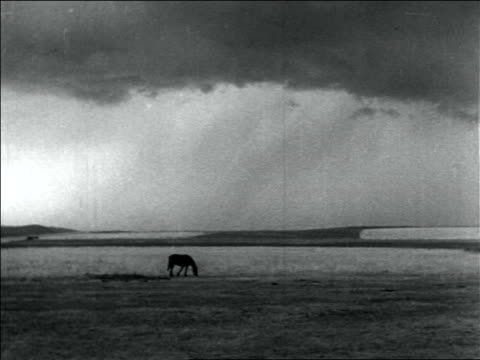 b/w 1936 long shot horse grazing on plain with storm clouds in background / dust bowl / usa - dust bowl stock videos and b-roll footage